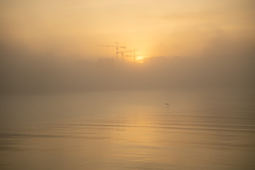 foggy sunrise seaview, contruction site cranes in the middle of fog